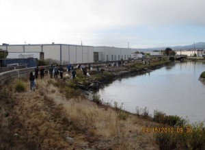 In September 2012 65 volunteers showed up to clean Colma Creek  Photo Tom Carney SSFFD