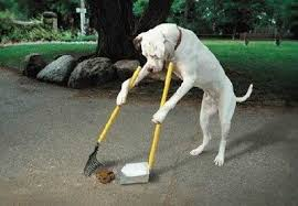 How would you get your neighbor to clean up after their dog?