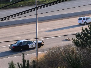 Dead cougar on 280 CHP_AndyHowse