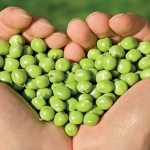 hand heart of peas