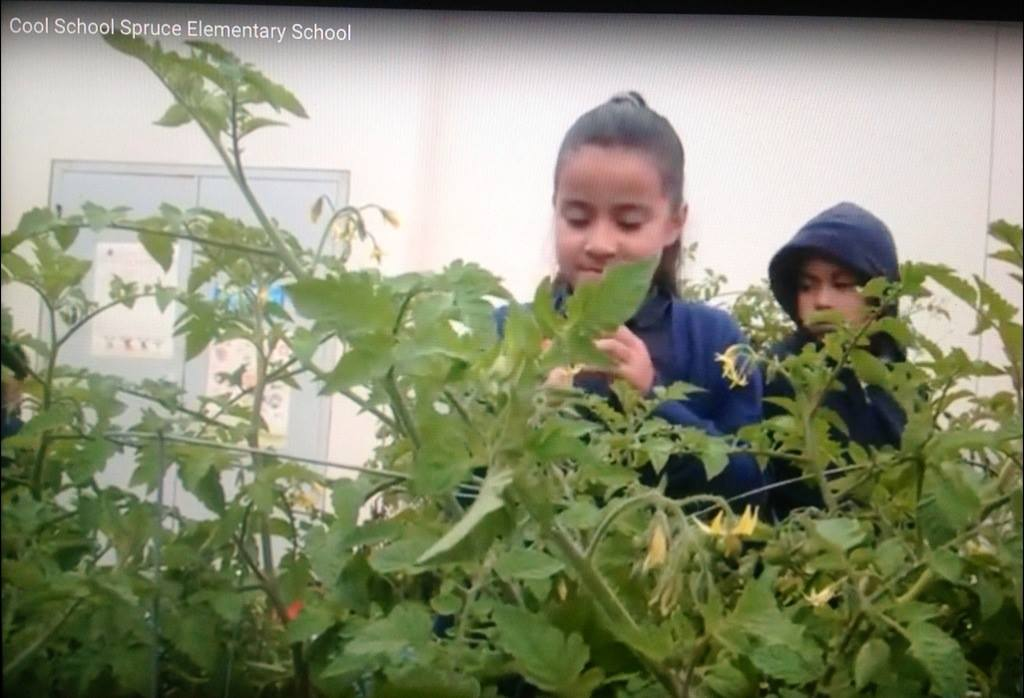 It takes nurturing and time to enjoy the fruits of their labor, another learning experience for our students Photo: KPIX